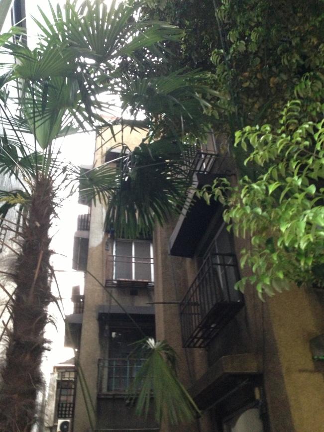 djnki palm