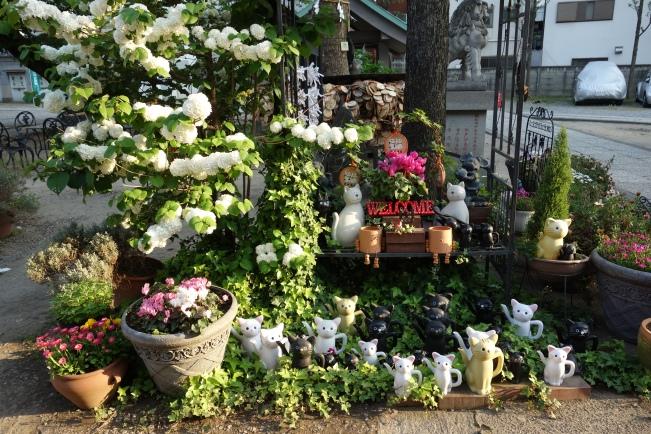 Imado flowers