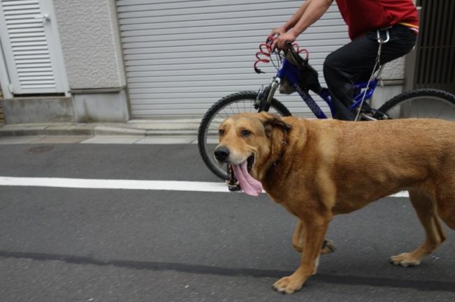 dog and wheel large