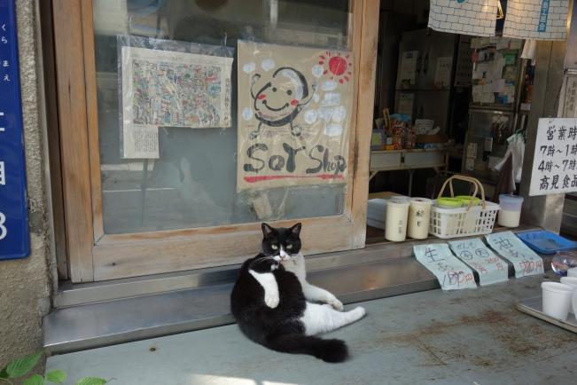 Tofuya cat