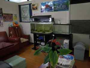 Oyu fishtank copy