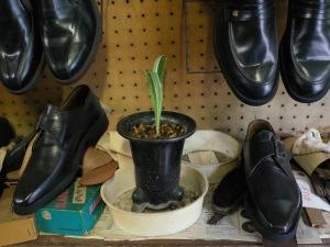 shoes plant