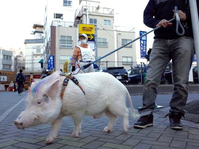 Pig main