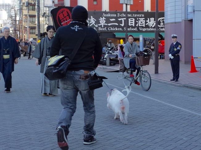 Pig running away2