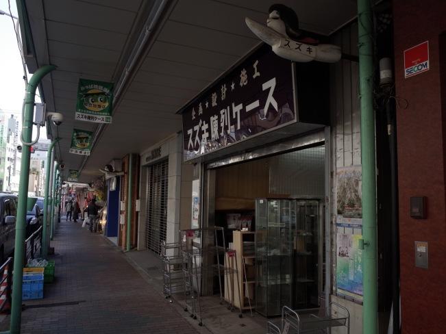 wollemi-pine-suzuki-shop-long